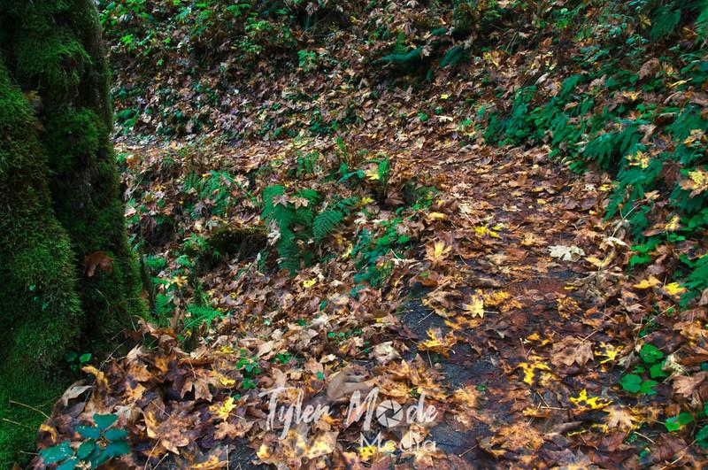 18  G Grist Mill Path