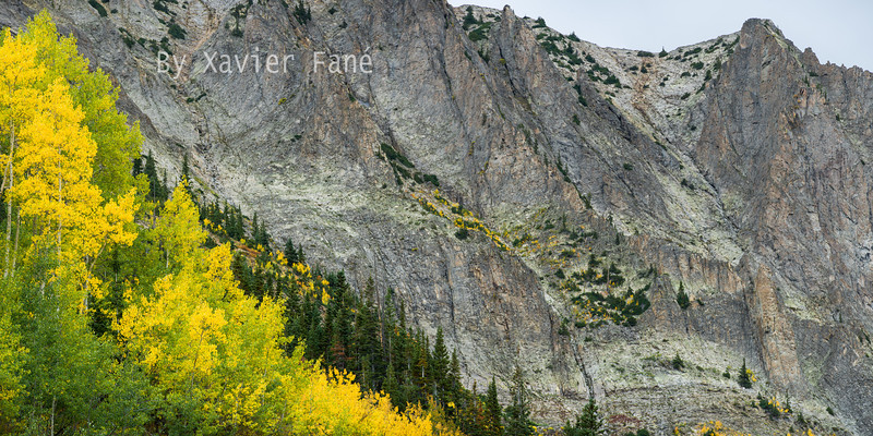 Aspens and the buttresses of Gothic Mtn.