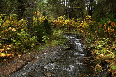 September 21, 2013.  Winner Creek Trail, Alyeska