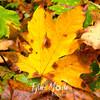 9  G Maple Leaf