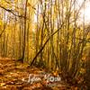 157  G Angels Rest Trail Fall Sun