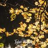32  G Yellow Leaves and Lake