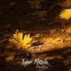 263  G Leaf on Trail