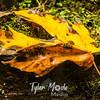 10  G Leaf on Rock