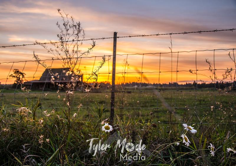 72  G Barn Sunset Flowers Wide