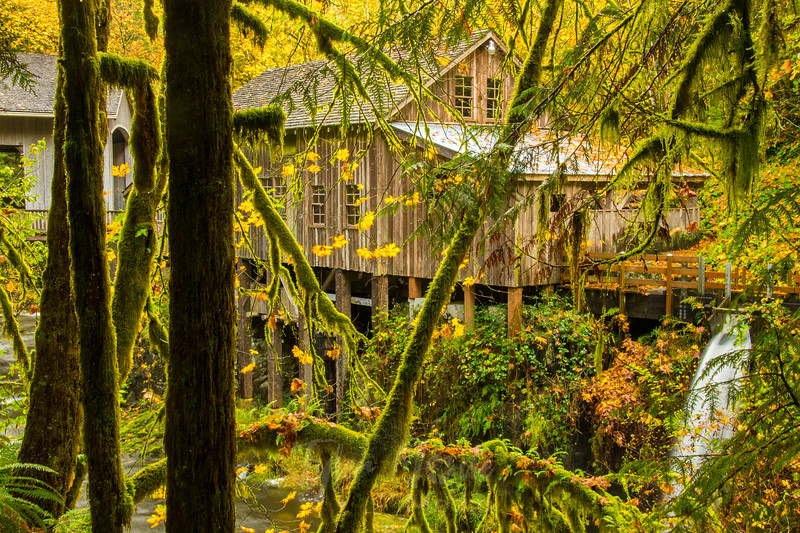 50  Grist Mill Through Trees