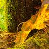 51  Grist Mill Leaf