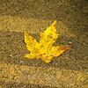 65  Grist Mill Leaf