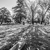 7  Cemetery Wide Grave BW V