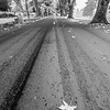 6  Officers Row Leaf in Road BW V