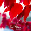 71  G Maple Leaves