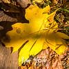 12  G Lucia Falls in Fall Leaf