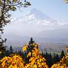 32  G Fall and Mount Hood V