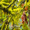 7  G Leaf and Moss