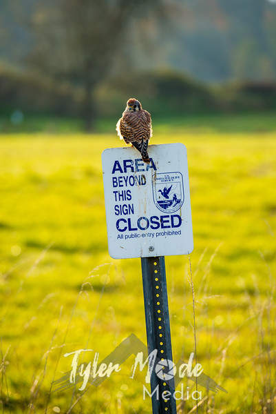 84  G Ridgefield WR Bird V
