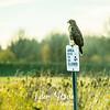 72  G Ridgefield WR Hawk