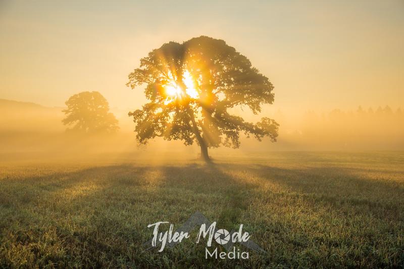 43  G Trees in Field Sunrise