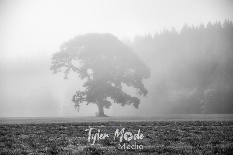 39  G Tree and Fog BW