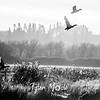 54  G Ridgefield WR Ducks BW