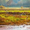 55  G Ridgefield WR Ducks