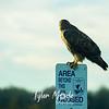 73  G Ridgefield WR Hawk