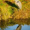 82  G Ridgefield WR Blue Heron V