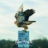 75  G Ridgefield WR Hawk