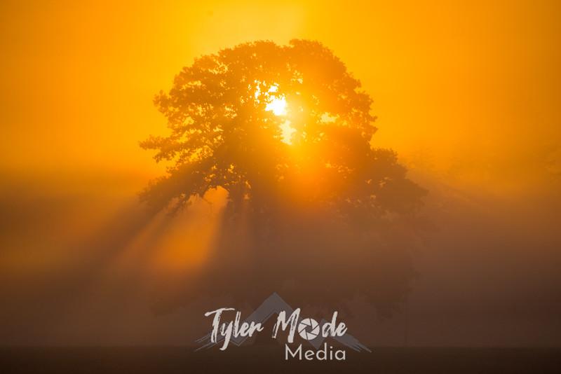 14  G Tree in Field Sunrise Close