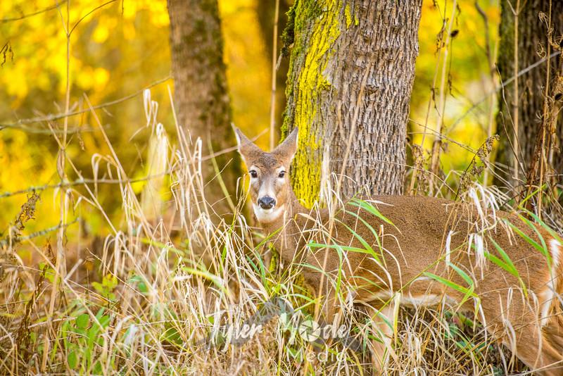 18  G Ridgefield WR Deer