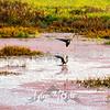 60  G Ridgefield WR Ducks