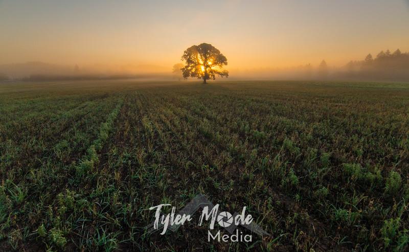23  G Tree in Field Sunrise Wide