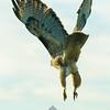 77  G Ridgefield WR Hawk V