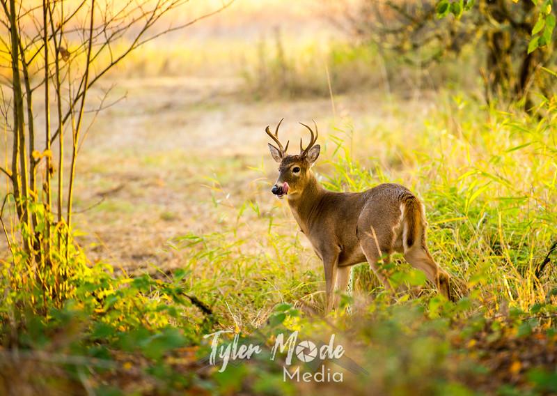 26  G Ridgefield WR Deer