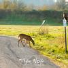 68  G Ridgefield WR Deer and Hawk