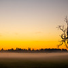 25  G Misty Field Tree Sunset
