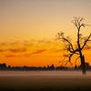 27  G Misty Field Tree Sunset Right