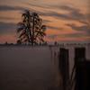 40  G Fene and Tree Mist V