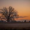 35  G Misty Field Tree Sunset