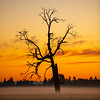 26  G Misty Field Tree Sunset V