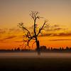 32  G Misty Field Tree Sunset