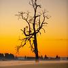 19  G Misty Field Tree Sunset V