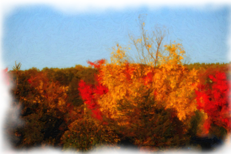 Oil Painting of Fall Tree Line
