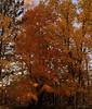 Potato Fall Regional Park, Wisconsin - Fall 2010