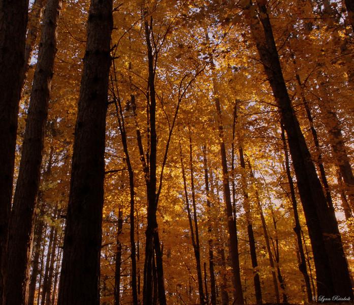 Copper Falls State Park - Fall 2010