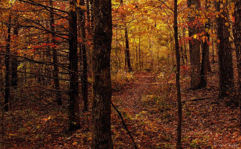 Sylamore Trail, Arkansas