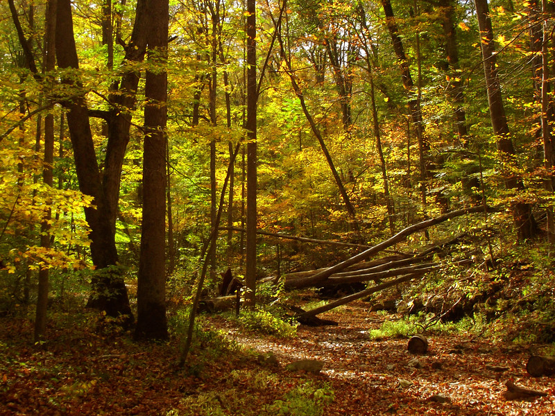 Wolf Den Trail, McCormick Creek State Park, Indiana