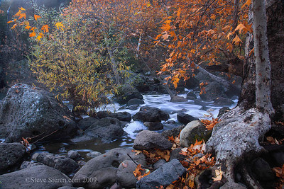 Fall Color near Los Angeles, in the Santa Monica Mountains