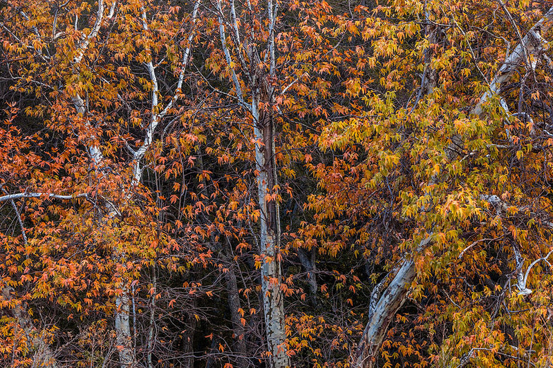 Placerita Canyon State Park in Autumn