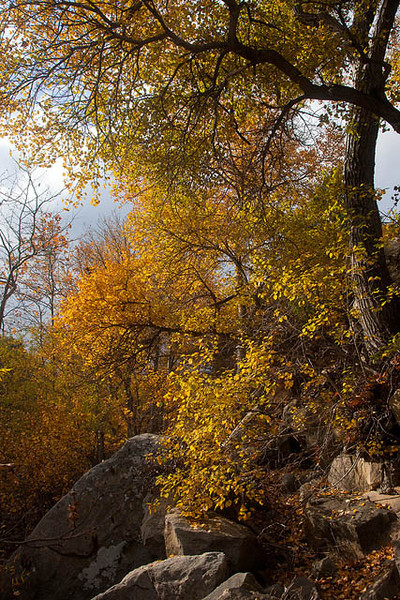 Where there is water, you'll find fall color.