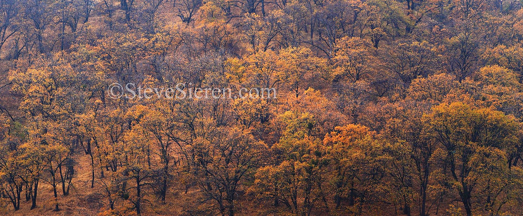 Fall color oaks in the mountains near San Diego